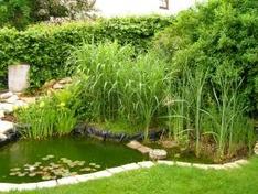 Teichbauanleitung anleitungen f r verschiedene teicharten for Gartenteich ohne fische